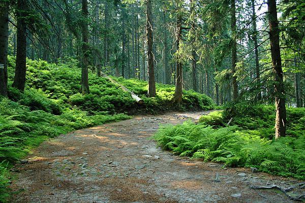 szlaki turystyczne - atrakcje turystyczne województwa łódzkiego