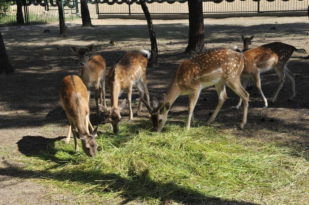 Mini Zoo Malutkie Resort   Atrakcje dla dzieci  Łódzkie   Śląskie