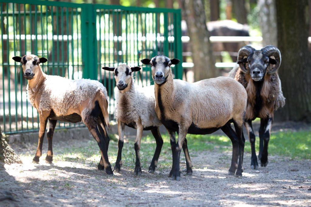 Mini Zoo Malutkie Resort | Atrakcje dla dzieci |Łódzkie | Śląskie